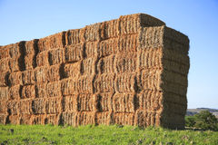 Stacked straw bales. On the field Stock Photos