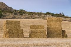 Stacked straw bales on a harvested field. Groups of stacked straw bales on a harvested cereal field Royalty Free Stock Photo