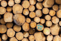Stacked timber in a dutch forrest Royalty Free Stock Images
