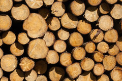 Stacked timber in a dutch forrest Royalty Free Stock Image