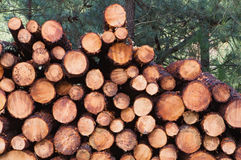 Stacked timber logs Royalty Free Stock Images