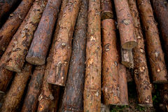 Stacked timber logs. A Stacked timber logs, pine background Stock Photography