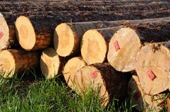 Stacked timber logs. Ready for processing royalty free stock image