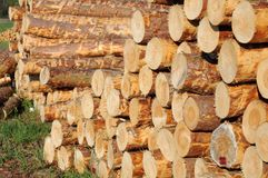 Stacked timber logs. Ready for processing royalty free stock photos