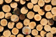 Stacked timber logs Stock Photos