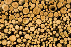 Stacked timber logs, biomass Stock Image