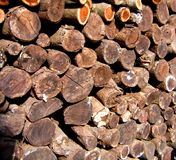 Stacked Tree Logs. To be used for firewood Stock Photography