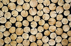 Stacked tree slices Royalty Free Stock Images