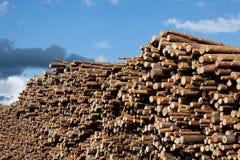 Stacked tree trunks royalty free stock photos