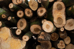 Stacked tree trunks Royalty Free Stock Photography
