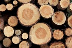 Stacked Tree Trunks Royalty Free Stock Images