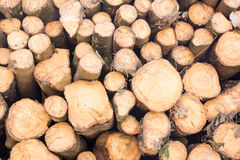Stacked tree wood logs background Royalty Free Stock Photos
