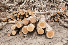 Stacked tree wood logs background Stock Images