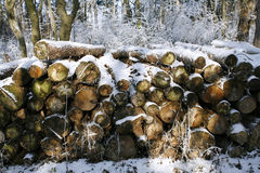 Stacked tree wood logs at winter forest Royalty Free Stock Images