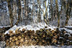 Stacked tree wood logs at winter forest Stock Images