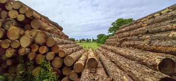 Stacked up cut logs Royalty Free Stock Photos