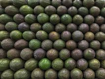 Wall of Avocados. Stacked wall of Haas avocados are uniform, the design repetitive and shows various stages of ripeness. The avocados fill the frame and have Royalty Free Stock Photos
