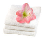 Spa with pink flowers Royalty Free Stock Photo