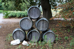 Stacked wine barrels. Oak wine barrels stacked under a oak tree on a wine estate near Stellenbosch South Africa Stock Photography