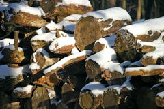 Stacked Wood. In Winter Royalty Free Stock Photography