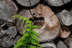 Stacked wood and fern Stock Image