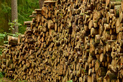 Stacked firewood, lumbering Royalty Free Stock Images