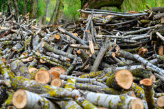 Stacked Wood Logs With Pine Trees Stock Photography