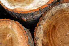 Stacked Wood Logs With Pine Trees Stock Images