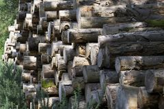 Stacked wood logs in woodlands stock photo