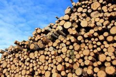 Pulp Wood and Blue Sky Stock Images