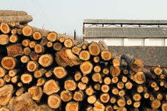 Stacked wood picture Stock Photography