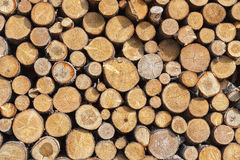 Stacked wood pine timber Royalty Free Stock Image