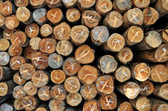 Stacked wood pine timber for construction Stock Photo