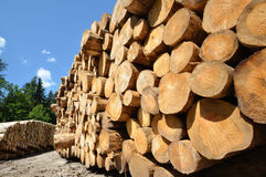 Timber harvesting. Stacked wooden logs Stock Photography