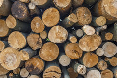 Stacked wooden Logs Stock Photos
