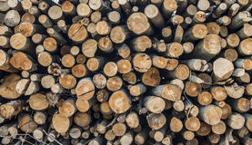 Stacked wooden Logs Royalty Free Stock Photo