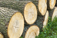 Stacked wooden logs, tree trunks. The section of the circular timber. Made for firewood Stock Photography