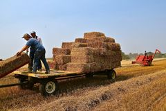 Free Stacking Bales Of Straw On A Wagon And Rack Royalty Free Stock Image - 108476316