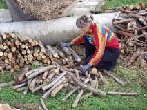 Stacking firewood 2 Royalty Free Stock Photos
