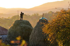 Stacking hay at sunset