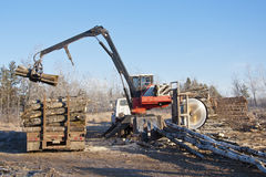 Stacking Logs Royalty Free Stock Photo