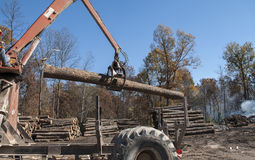 Stacking tree logs at a sawmill Stock Images