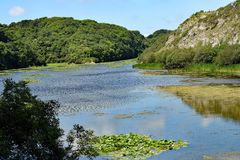 STACKPOOLE LILLY PONDS IN WEST WALES. LILLY PONDS a tourist attraction the footpaths around the large lake lead entirely around it. The area is very beautiful in Royalty Free Stock Photos