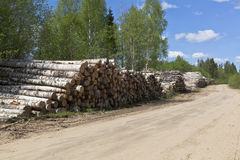 Stacks of birch logs close to the country road. Road in Verhovazhskom district Vologda region Royalty Free Stock Photos