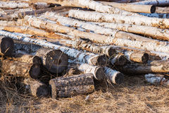 Stacks of birch logs. Natural material, alternative energy Stock Photography