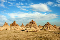 Stacks of cane in a conical shape. Stock Photo