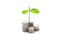Stacks Of Coins And A Small Plant Sprouting From There Over Whit Stock Photo