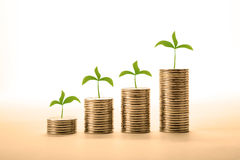 Stacks of coins with sprouts make money Royalty Free Stock Photo