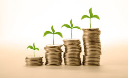 Stacks of coins with sprouts make money Stock Image