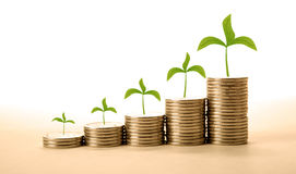 Stacks of coins with sprouts make money Royalty Free Stock Image